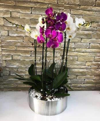 6 Dal Orkide Aranjmanı