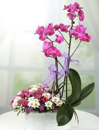 Renkli Orkide ve Papatyalar