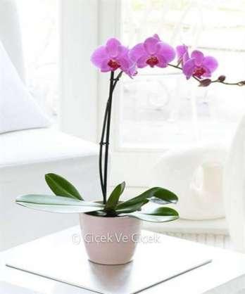 Tek Dal Renkli Orkide